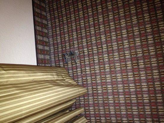 Holiday Inn Express San Antonio N-Riverwalk Area: Hole in carpet in King room