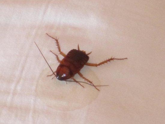 SERHS Natal Grand Hotel: Baratinha encontrada no lençol da cama