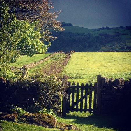 Beechenhill Farm: A view from the cottage for 2