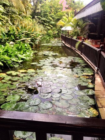 Sokhalay Angkor Resort & Spa: Lovely Coy Fish gardens