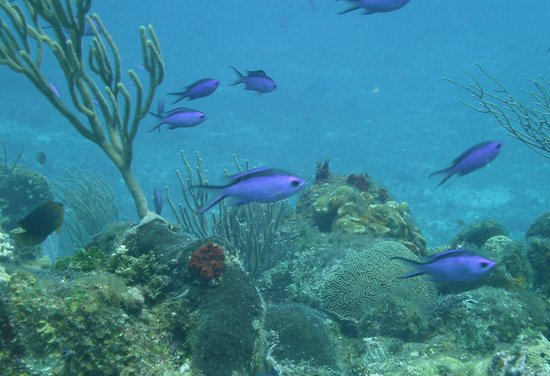 Two D's Diving and Tour Adventures : Two D's and our Discover Scuba day