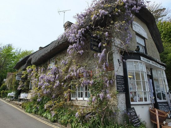 The Bat's Wing, Godshill and The Lace Shop: Wisteria covered cottage frontage