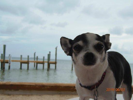 White Gate Court: Lola on the beach