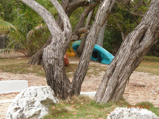 White Gate Court: kayaks for guest use