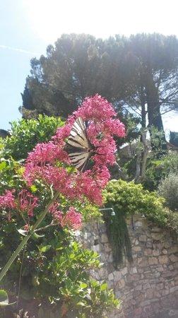 Casale Fontibucci: The gardens
