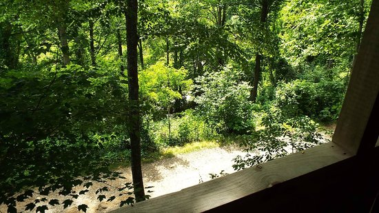 Cabins of Asheville : View from porch
