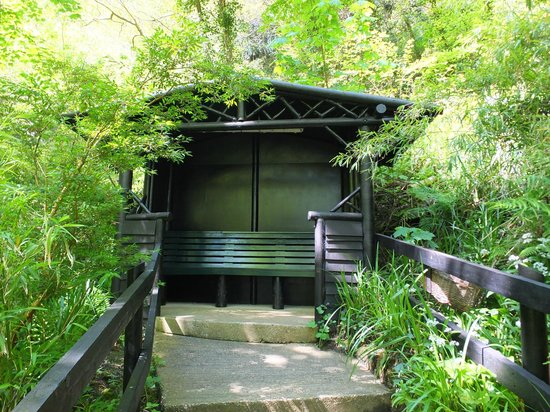 Shanklin Chine: Chine - shelter and seating