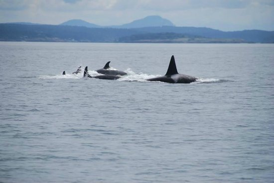 Eagle Wing Whale Watching Tours: Transients