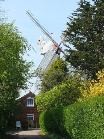Skidby Windmill : The mill through the trees
