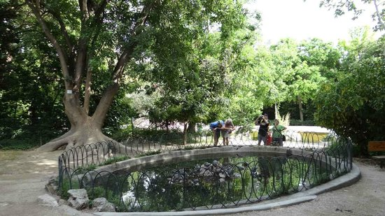 The Pond with the turtles in the National Gardens