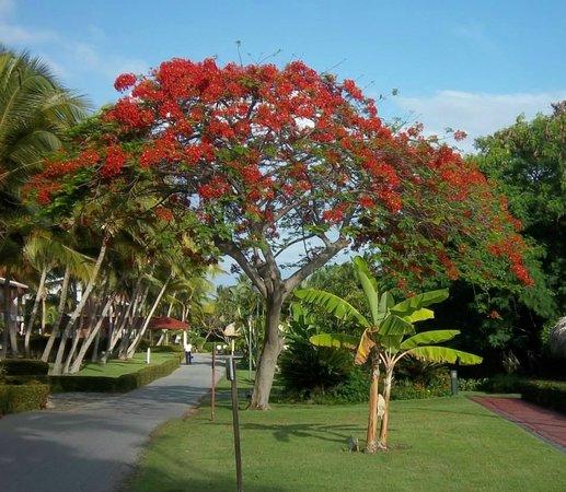 TRS Turquesa Hotel: Beautiful & lush grounds