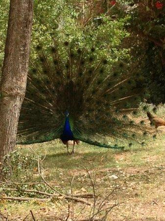 Safari Park: Safari Ramat Gan