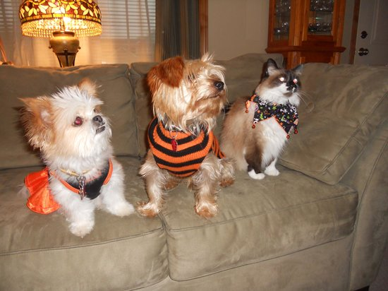 Phineas Swann Bed and Breakfast Inn: Our pets, Molly, Max and Phoebe