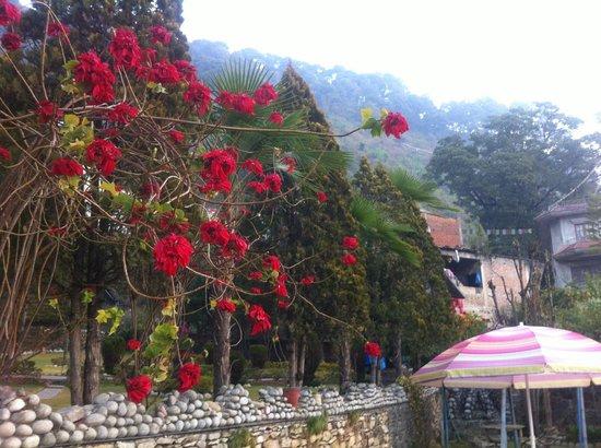 Himalayan Yoga Academy and Retreat: views