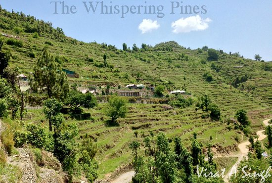 Whispering Pines Himalayan Retreat: when you reach whispering pines