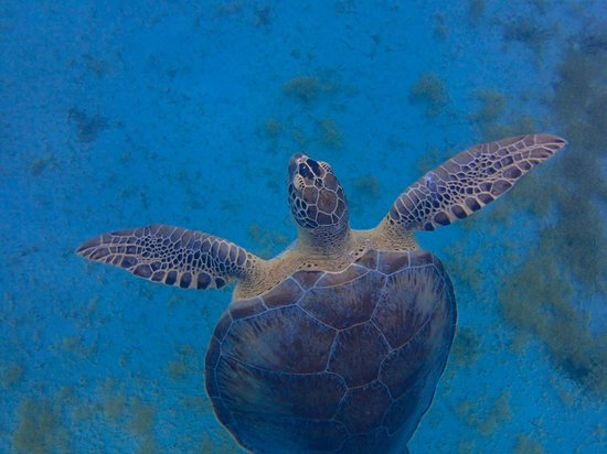 Cruise Ship Excursions - Castaway Girl: Sea Turtle at Turtle Cove