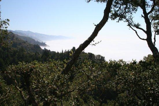 Nepenthe : La vue en mangeant sur la terrasse