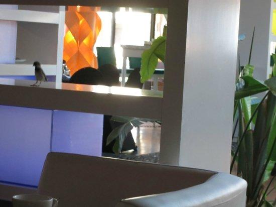 Sofitel Essaouira Mogador Golf & Spa: Bird in the restaurant(!!) at breakfast time!