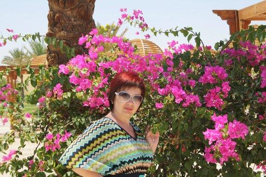 Desert Rose Resort : очень красивая территория
