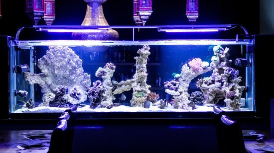 Cardamon Green: Cardomon Green's exquisite fish tank