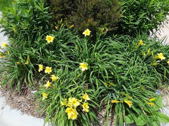 Paul J Ciener Botanical Garden: Beautiful plants.