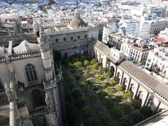 Catedral de Sevilla: Cattedrale di Siviglia3