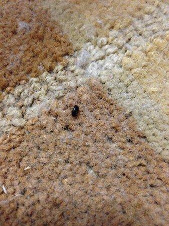 Hyatt Regency North Dallas/Richardson: Bed bugs