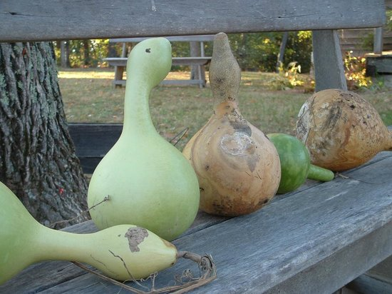 Burritt on the Mountain: Gourds at harvest time.