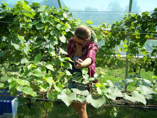 Elfs Farm Winery and Cider Mill: Harvest Time