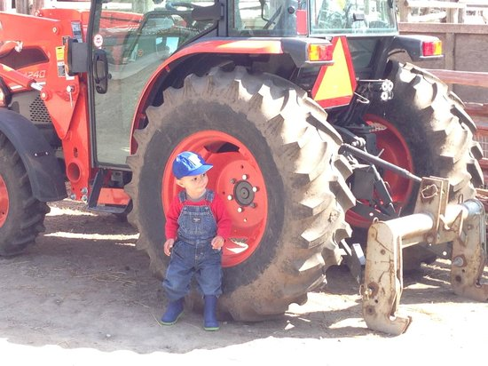 Riverdale Farm: The toddler boys seem to spend most of the time looking at the tractors.
