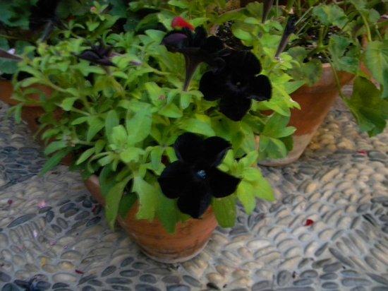 Flores Negras Picture Of Patios De Cordoba Cordoba Tripadvisor