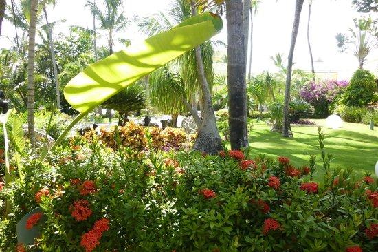 Excellence Punta Cana: The garden area near the entrance of the resort