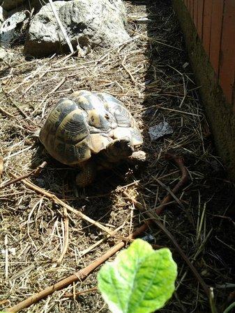 Hotel Pontos: Schildkröte auf dem Gelände