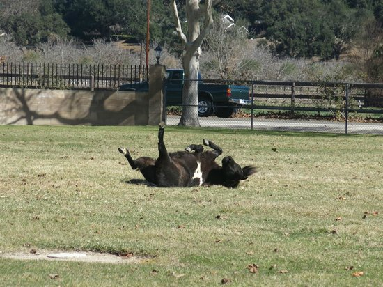 Quicksilver Ranch : Being silly, this horse is getting a back scratch.