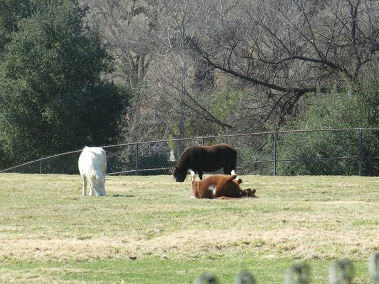Quicksilver Ranch : And more antics - first warm day (in February).