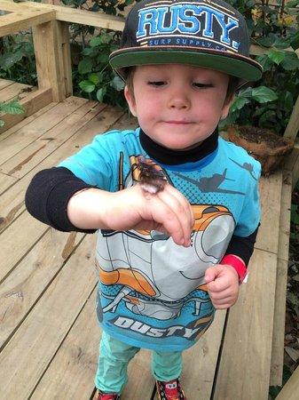 Butterfly Creek: Butterflies everywhere