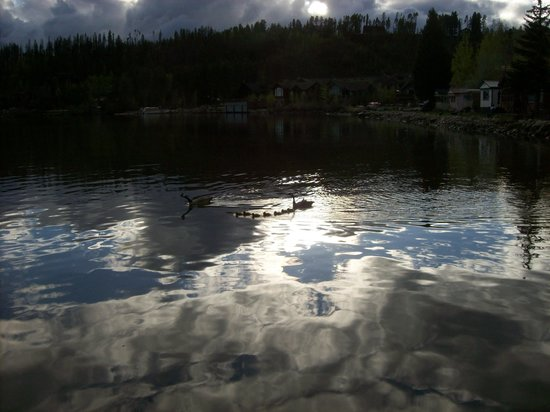 Western Riviera Lakeside Lodging & Events: Geese on the lake
