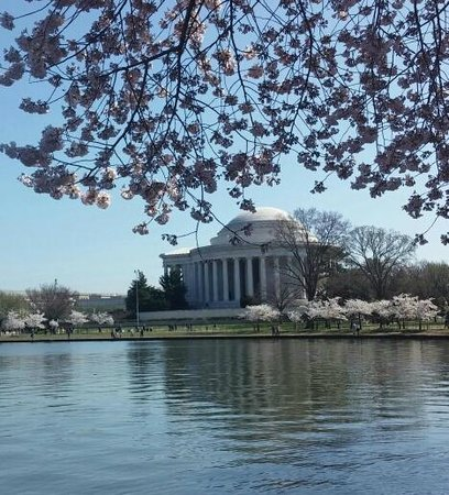 Cherry Blossoms in Bloom Frame Jefferson Memorial