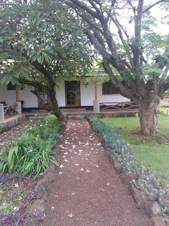 Ameg Lodge Kilimanjaro : My hotel room!