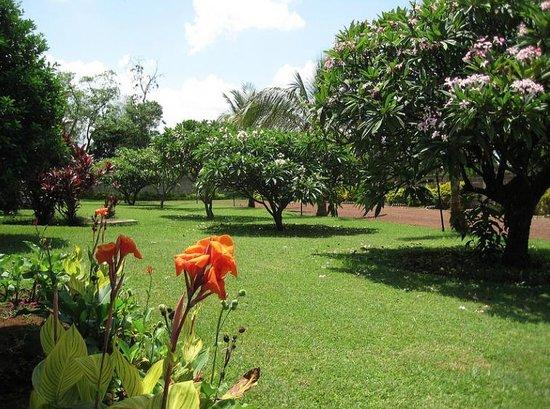 Ameg Lodge Kilimanjaro : hotel garden!