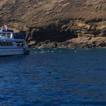 Pacific Whale Foundation : Maui Snorkel Trip