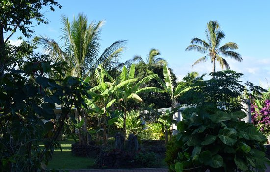 Chez Maria Goretti: Tropical Setting