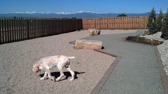 Best Western Plus Crossroads Inn & Conference Center: The New Dog Excercise Area with a Fantasic View!