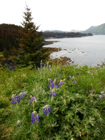 Fort Abercrombie State Park: Wildflower Meadow Trail Overlook