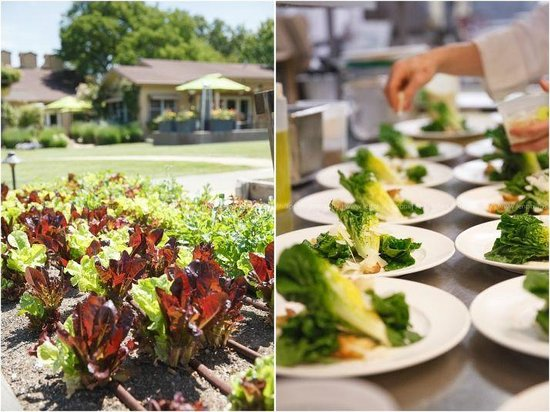 Brix: Photos from our wedding of the gardens and the salads we were served at lunch. Photos by Jen Phi