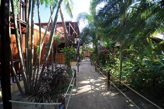 Bananarama Beach and Dive Resort: Walkway to rooms
