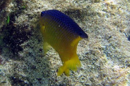 Bananarama Beach and Dive Resort : Snorkeling off the Beach