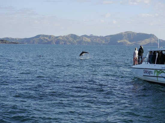Explore - Bay of Islands: Dolphins!