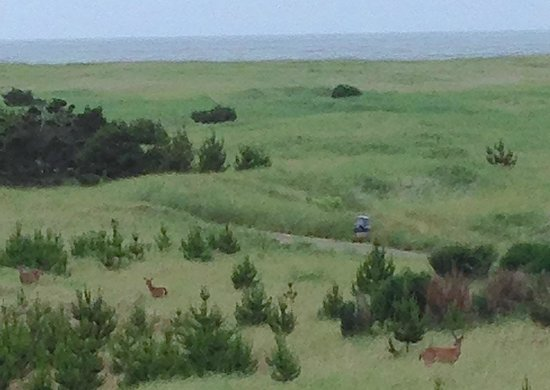 Chautauqua Lodge: The deer frolicking in the morning, as seen from the balcony.  Note the great ocean view also.