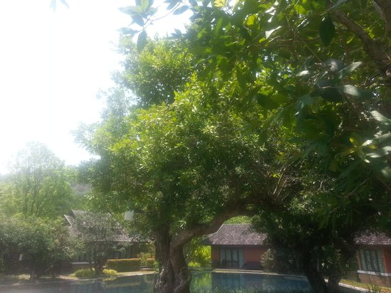 Sibsan Resort & Spa Maetaeng: ชอบมุมนี้แหล่ะคร้า
